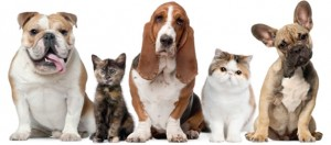 pet friendly apartments in Miramar for rent