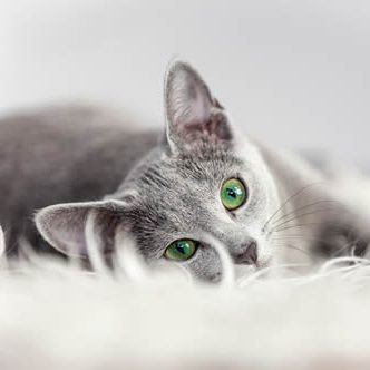 Apartment Rentals Miramar_cat_gray